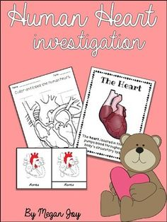 Structure & Functions of the Human Heart Perfect for Valentine's Day Science! This packet includes activities and resources for introducing students to the structure and functions of the Human Heart. Contents include... -KWL Chart -Pulse Rate Math Activities -Heart Posters -Parts of the Heart 3 Part Cards -Vocabulary Cards -Writing Activity -Parts of the Heart Structure/Function Flip Book -Parts of the Heart Labeling Activity -Healthy Heart Activity