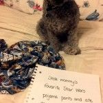 From Dogshaming. May The Shame Be With You!