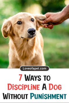 Puppy Training Tips, Training Your Dog, Pet Dogs, Pets, Doggies, Dog List, Dog Rules, Puppy Care, Dog Care Tips