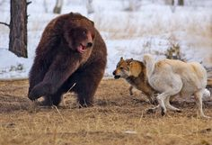 Reminds me of the scene when a grizzly bear attacks Melanie but Cassel, Nia, Aspen, Cara and Rayna save her life... maybe this is the point when Cara arrives? :-)