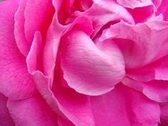 Remèdes naturels de mamie, beauté et santé, par les plantes: Recette de lotion nettoyante à la rose pour peaux sensibles