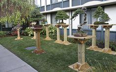 build a bonsai stand - Google Search