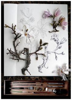 botanical illustration, artist studio, work in progress