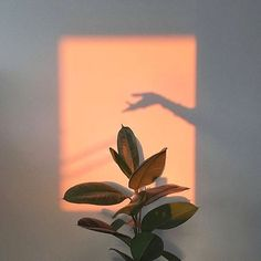 Plants aesthetic light 34 Trendy ideas – Photography – … – Best Home Plants Aesthetic Light, Orange Aesthetic, Aesthetic Beauty, Aesthetic Plants, Fotografia Retro, Jolie Photo, Aesthetic Pictures, Wall Collage, Picture Wall