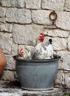 A chicken (or three) in every pot