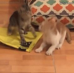 Little kitten just didn't realize his own amazing strength.