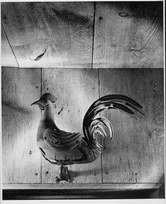 Rooster, Andre Kertesz, Winterthur