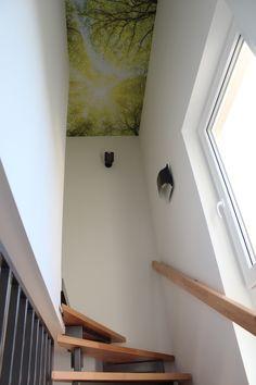 fototapete baum fototapeten pinterest. Black Bedroom Furniture Sets. Home Design Ideas