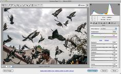 pigeons02 by danny's workpad, via Flickr