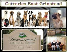 For more detail once visit at: http://www.hammerpondkennels.co.uk/nav/micro-chipping