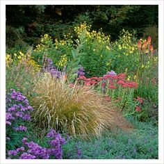 GAP Photos - Garden & Plant Picture Library - Mixed Border of Sedum, Asters, Kniphofia and Ornamental Grasses. Northern California, USA - GAP Photos - Specialising in horticultural photography