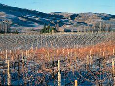 Carrick vineyard, Central Otago – New Zealand