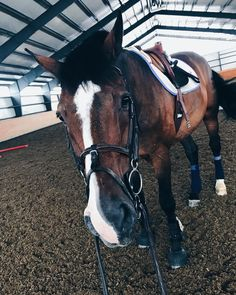"@thefit.equestrian on Instagram: ""my favorite man  ready to go back to school but bummed that I won't get to see this face all the…""  horse, bay, warmblood, hunter, jumper, equitation, riding, equestrian, fitness"