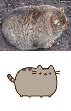 Pusheen is real!