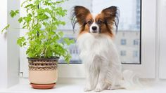 Make sure you consider your pets when you're buying indoor house plants. Here's what to look out for.