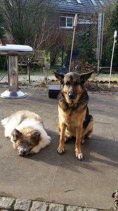 Chewbacca und Paula