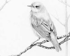 Image result for bird pencil drawing