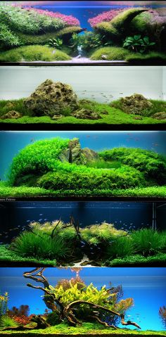 Aquascaping | 090908_aquascaping_2.jpg