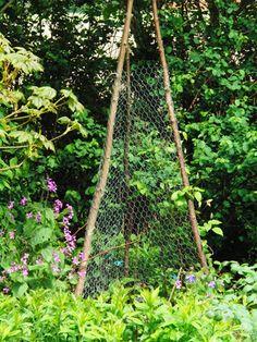 Er zijn prachtige tuinornamenten, klimzuilen en rekken te koop waar gretige klimmers, zoals de clematis, zich graag aan vastklampen.   Dit is echter zelf gemaakt.