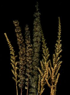 55785.01 Astilbe, Ligularia, Liatris | Flickr - Photo Sharing!