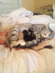 私は私が目を覚ますと私の猫は私と一緒にベッドの中で彼女の赤ちゃんを持っていた見つけることが冗談を言ってきました。 私は彼女が彼女の子猫を持っていた場所を推測することができます確信しています。