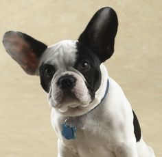 Bubba Louie sits for his first official portrait : )....Bubba always makes me smile :)