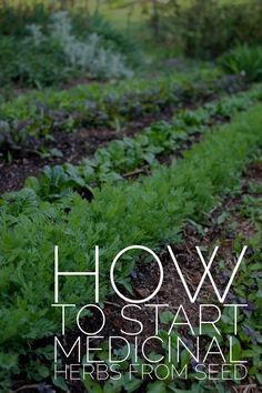 A Guide to Growing Medicinal Herbs From Seed // Blog Castanea