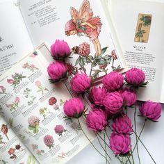 "221 Beğenme, 28 Yorum - Instagram'da Canserina Felt Flowers & Craft (@canserina): ""Currently my favorite  #RedClover  #canserinaflowercharts"""