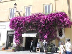 What a window flower box - Rome, Italy
