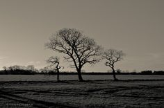 Three Trees by John Pettigrew on 500px