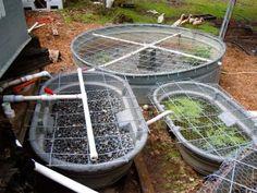 Setting up Duck-Ponics - Daniela describes bringing our duck-based aquaponics system online