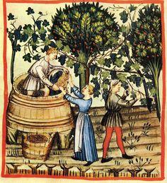 Autunno: la raccolta dell'uva, Tacuinum Sanitatis, Vienna, Biblioteca Nazionale