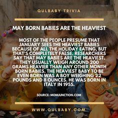 Qulbaby Trivia: May borns are the heaviest. Baby Trivia, Babies, Sayings, Babys, Lyrics, Baby, Infants, Boy Babies, Children