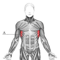 Lapapunnerrus on pieni, mutta tehokas liike. Kun opettelet sen, niskasi ja hartiasi kiittävät ja ryhtisi suoristuu.