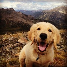 we should all be happy like this dog