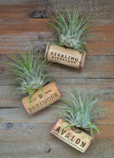 These look so cute :) // MisterMartha.com // Air Plant Wine Bottle Cork Magnets // http://www.mistermartha.com
