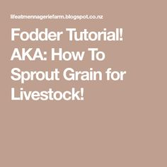 Fodder Tutorial! AKA: How To Sprout Grain for Livestock!