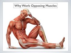 Why you should work opposing muscles   #fitness #muscles #strength