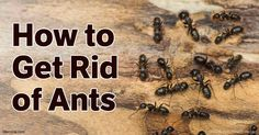 Here are some tips that will help you the next time you have an ant invasion in your home. http://articles.mercola.com/how-to-get-rid-of-ants.aspx