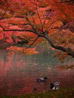 ✯ Falling Leaves