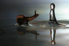 (1) John Kellden - Google+ - Stunning weekend art:Snail and the raindrop by Vadim Trunov