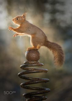 """Squirrel:  """"No!  I am NOT spiralling out of control!"""""""