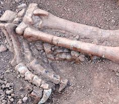 180-mn-yr old dinosaur fossils unearthed in China | #LittleNews