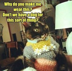 Why do you make me wear this Sweater #Cat Via The Chive #catsaturday