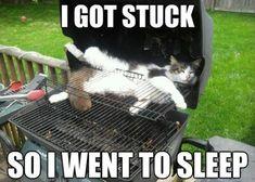 I Got Stuck So I Went To Sleep #catoftheday