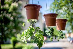 Upside Down Plants, Upside Down Tomato Planter, Plants That Love Shade, Shade Plants, Cherry Tomato Plant, Tomato Plants, Garden Soil, Raised Garden Beds, Fruit Garden