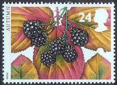 The Four Seasons. Autumn 24p Stamp (1993) Blackberry