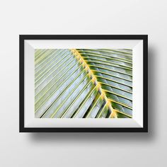 "Palm Tree Leaf | Tropical Photography | Beach Garden | Large Wall Art Print | Fine Art Photography | Close up | ""Soft Palm"""