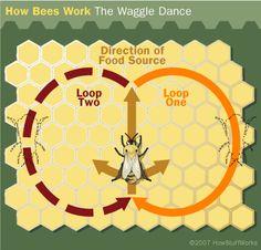 "HowStuffWorks ""Bee Navigation""- The Waggle Dance"