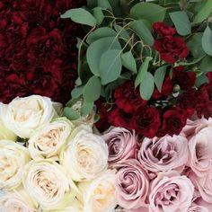 FiftyFlowers.com - Burgundy Blush DIY Wedding Flower Pack -Burgundy VERY sparingly
